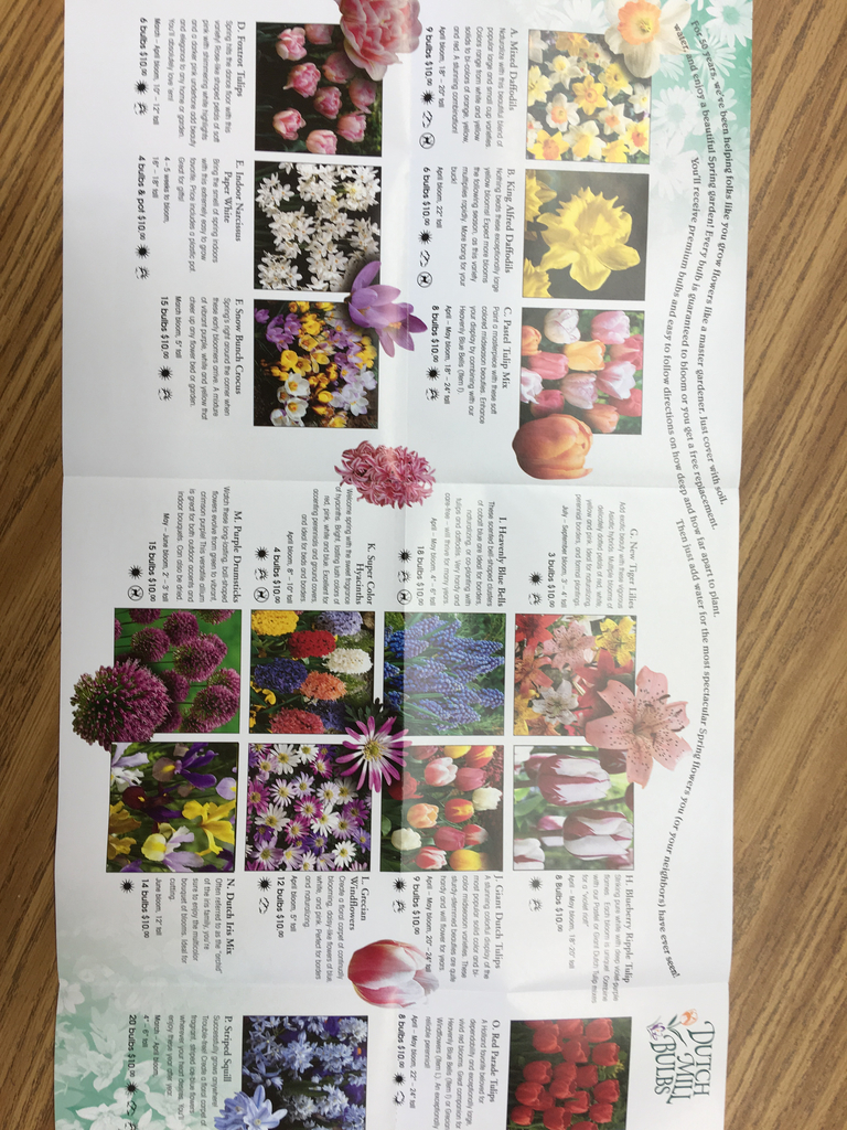 Flower bulb brochure sent home with students.